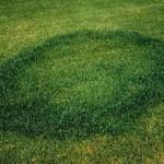 UFOの着陸痕か? 「フェアリー・リング」
