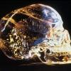 超古代の叡智「クリスタル・スカル」