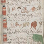解読不能な謎の文書「ヴォイニッチ手稿」
